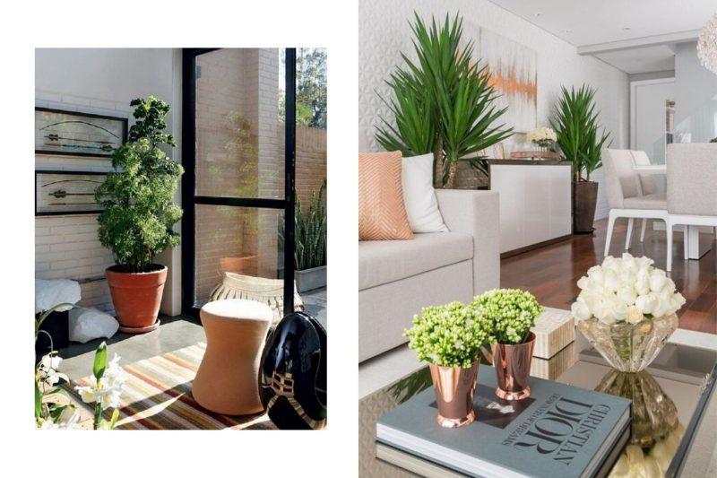 7 ideias para começar a ter plantas dentro de casa